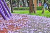 紫の浪漫。:IMG_8578.jpg