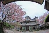 櫻。東方寺:IMG_12977.jpg