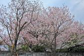櫻。東方寺:IMG_12989.jpg