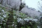雪。陽明山:IMG_7240.jpg