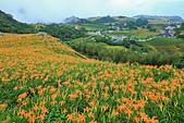 六十石山の金針花季。:IMG_10578.jpg