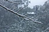 雪。陽明山:IMG_7248.jpg