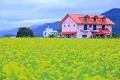 花東縱谷。油菜花:IMG_12465-31.jpg