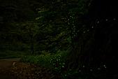 夜。螢火蟲:IMG_9698.jpg