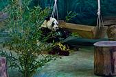遊。木柵動物園:IMG_0032.jpg