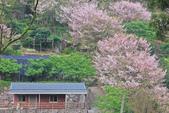 櫻。陽明山:IMG_8756.jpg