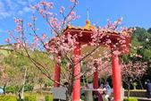 櫻。屈尺公園:IMG_7540.jpg
