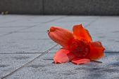 花。木棉:IMG_4898.jpg