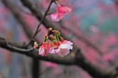 櫻。花園新城:IMG_7582.jpg