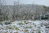 雪。陽明山:IMG_7196.jpg