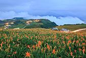 六十石山の金針花季。:IMG_10527.jpg