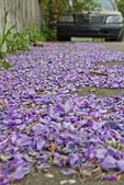 紫藤の恋。:IMG_3707.jpg