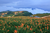 六十石山の金針花季。:IMG_10528.jpg