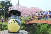 櫻。三生步道:IMG_8375.jpg