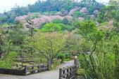 櫻。陽明山:IMG_8757.jpg