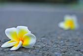 雞蛋花。:IMG_9464.jpg