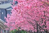 櫻。希望之河:IMG_8353.jpg