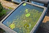 植物園。:IMG_4230.jpg
