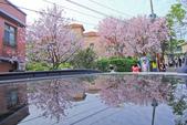櫻。東方寺:IMG_8475.jpg