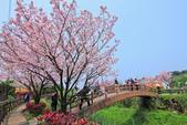 櫻。三生步道:IMG_8651.jpg