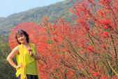 槭紅。:IMG_8711.jpg