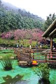 九族。櫻花季:IMG_46523.jpg