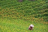 六十石山の金針花季。:IMG_10511.jpg