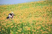 六十石山の金針花季。:IMG_10499.jpg