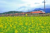 花東縱谷。油菜花:IMG_12473-39.jpg