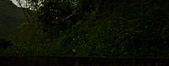 夜。螢火蟲:IMG_9690.jpg