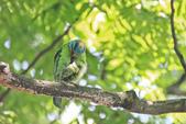 五色鳥。:IMG_10197.jpg