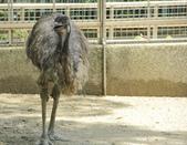 高雄。壽山動物園:IMG_0823.JPG