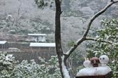 雪。陽明山:IMG_7210.jpg