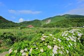 竹子湖。繡球花:IMG_13671.jpg