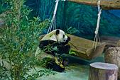 遊。木柵動物園:IMG_0036.jpg