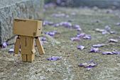 紫藤の恋。:IMG_3341.jpg