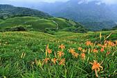 六十石山の金針花季。:IMG_10576.jpg