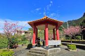 櫻。屈尺公園:IMG_7526.jpg