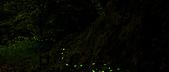 夜。螢火蟲:IMG_9700.jpg