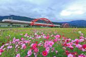 花東縱谷。油菜花:IMG_12445-11.jpg