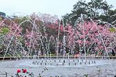 昭和櫻。:IMG_7855.jpg