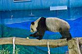 遊。木柵動物園:IMG_0040.jpg