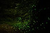 夜。螢火蟲:stackedImage7.jpg