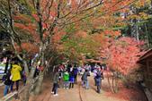 秋の福壽山。:IMG_6196.jpg