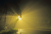 斜射光。:IMG_7305.jpg