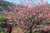 櫻。花園新城:IMG_7576.jpg