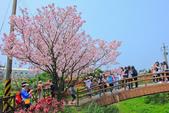 櫻。三生步道:IMG_8376.jpg