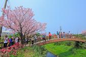 櫻。三生步道:IMG_8377.jpg