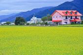 花東縱谷。油菜花:IMG_12467-33.jpg