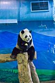 遊。木柵動物園:IMG_0041.jpg